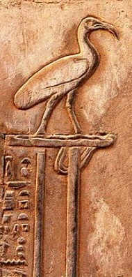 Thoth as Ibis, temple at Kom Ombo